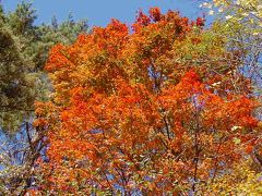 那須/裏磐梯の温泉と紅葉