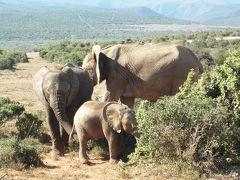 南アフリカ☆一ヶ月の旅 アドゥ・エレファント国立公園編
