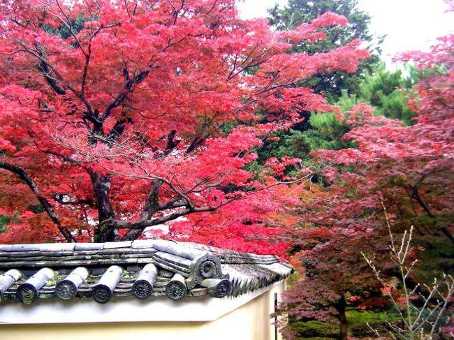 久しぶりに京都へもみじ狩りにバス旅行最初の目的地<br />は渡月橋から5分ほどの鹿王院へ。今回はこの鹿王院<br />のもみじから。<br />バスはタビックス。<br />焼津より京都まで約5時間ちょっと,お昼は弁当がでて<br />7800円。ガイドさんもよかった。添乗員さんも運転手<br />さんも気持ちよく接してくださった。<br />運転手さんには感謝、感謝。