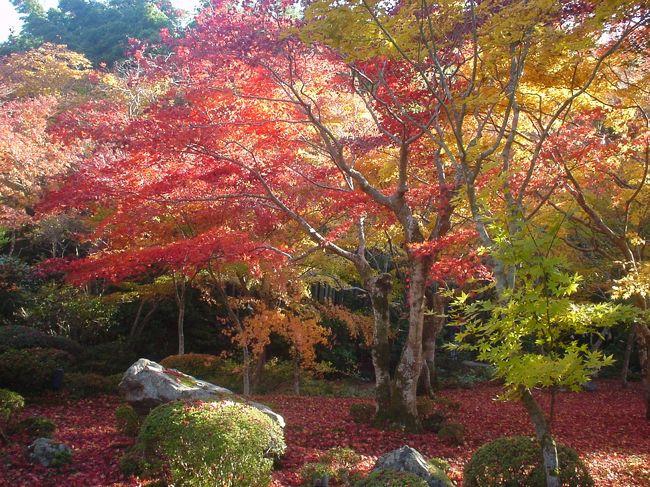 1泊で紅葉の京都へ行ってきました。<br /><br /> ☆ 旅のPhotoレポート : <br />  http://homepage3.nifty.com/bon_voyage/report.htm<br /> <br /> ☆ 管理人が泊まった!おすすめホテル・旅館 : <br />  http://homepage3.nifty.com/bon_voyage/osusume.html