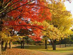 野川公園の秋