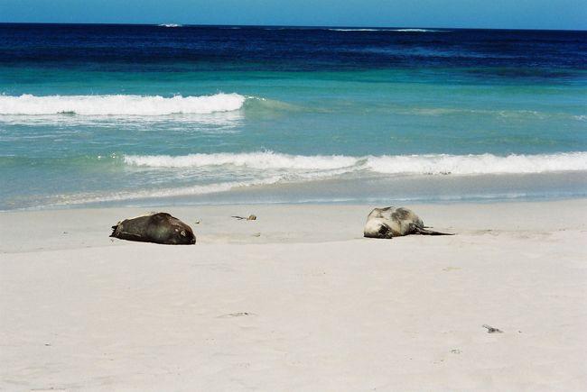留学中の知人を尋ねてアデレードへ。<br />SeaLinkのツアーで近くのカンガルー島に行ってきました。<br />アデレードからフェリーで1時間弱。途中、イルカの群れに遭遇しました。