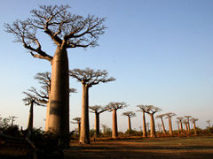 不思議の島!マダガスカルの旅 1・・旅いつまでも・・