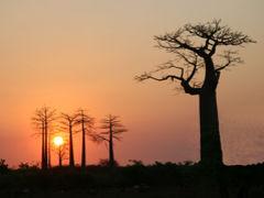 不思議の島!マダガスカルの旅 2・・旅いつまでも・・
