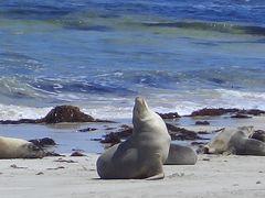アデレード→メルボルン(2) カンガルー島サウスコースト編 2006年11月