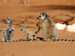 不思議の島!マダガスカルの旅 3・・旅いつまでも・・