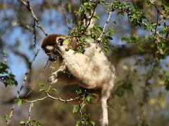 不思議の島!マダガスカルの旅 5・・旅いつまでも・・