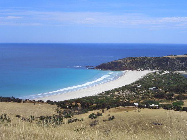 カンガルー島滞在3日目。今日の宿泊地はキングスコット。昨日までサウスコースととFlinders Chase国立公園を満喫したので、今日は北海岸を観光しながらキングスコットまで移動することにしました。<br />出発する前にガイドブックを見ていたら、シールベイの近くにある[Vivonne Bay]という所がオーストラリアのベストビーチということで何度も受賞しているらしいので、ちょこっと寄ってみました。そのあと[HARRIET RD]→[PLAYFORD HWY]→[Senlling Beach]→[Stokes Bay]へ行き、[Parndona ワイルドライフパーク]でカンガルーにエサを与えてから、キングスコットへ向かいました。<br />途中、[HARRIET RD]では車が横転しそうになったり、ワイナリーを訪ねてみたら土曜日なので営業時間に訪問できなかったりしましたが、北海岸のキレイな景色とワイルドライフパークの動物たちがすっかりカバーしてくれました!<br />キングスコットではペリカンがたくさんいて、ペリカン好きのダンナは大興奮♪ペリカンが空を飛んでいる姿をみて大喜びしてました。<br />---------------------------<br />今回のルートは<br />カンガルー島ペネショー 1泊<br />カンガルー島カレッタ 2泊<br />カンガルー島キングスコット 1泊<br />アデレード 2泊<br />ローベ 1泊<br />ポートランド 1泊<br />アポロベイ 1泊<br />メルボルン 1泊<br />という10泊12日の日程<br />---------------------------<br />表紙の写真はSenlling Beach
