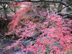 日本一遅い紅葉の名所・熱海梅林