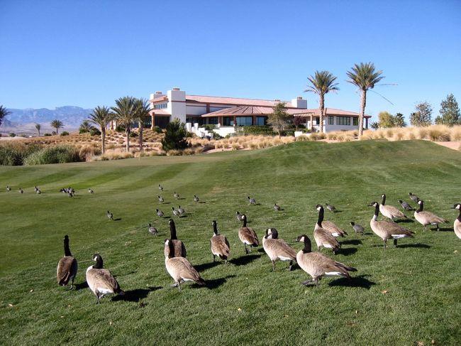 Silver Stone Golf Club<br />8600 Cupp Drive Las Vegas Nevada<br />Desert   3278Y  ☆<br />Mountain 3274Y ☆<br />Valley   3102Y<br />今回は☆6552Y/70.2をプレー。<br /><br />写真はクラブハウス前で撮影。