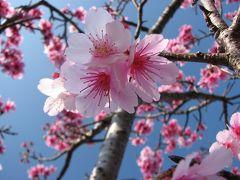 花咲く沖縄へ 八重岳琉球寒緋桜編