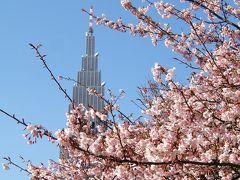 寒桜・梅が咲き競う新宿御苑
