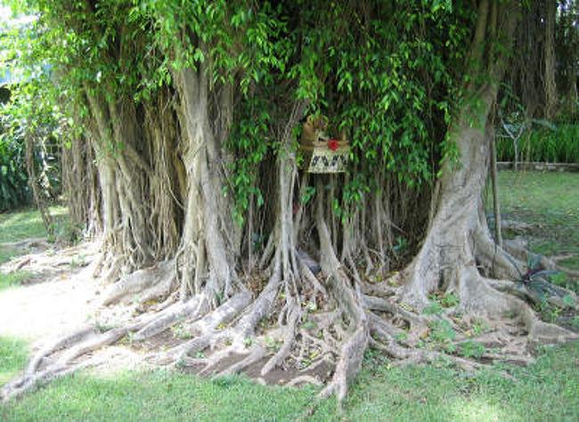 家族全員一致でいつでも行きたい<br />リゾート地No,1はバリ!<br />美味しい物はもちろん、美しい寺院と緑のコントラスト、色彩豊かな植物、やさしい微笑み、どこまでも続く青い海、とにかく全てが心地良い異文化なのです。はぁ、また行きたい・・・。<br />