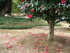 皇居東御苑・早春の桜たち