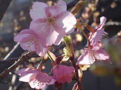 07我が家の花々