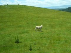 羊の国で新年を!'06~'07ニュージーランド旅行記?