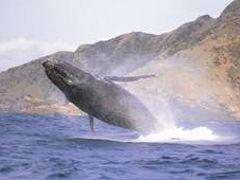 クジラ と 熱帯魚 と フグ