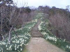 ★「千代?」の2007.2月の「白野江植物公園」・・・の旅。