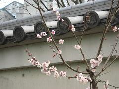 早春の小石川後楽園