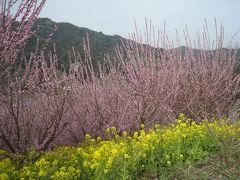 梅を見に道後温泉としまなみ海道(2)