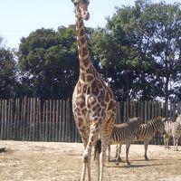 【東武動物公園】~あんた達おいくつですか・・・~