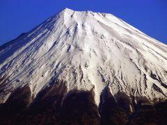 1.見頃を終えた三嶋大社の河津桜 蕾が膨らんできたソメイヨシノと枝垂れ桜 今日の富士山