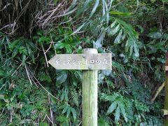 御蔵島 「タンテイロ巨樹の森」