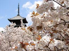京都('07 花見)