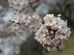 春のお散歩@浜離宮恩賜庭園