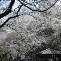 桜を求めて散策(桜坂~多摩川台)