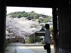 尾道 西国寺の桜