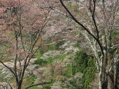 熊野三山巡り&吉野山桜巡り。その3:洞川温泉&吉野山編