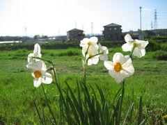 川沿いに春がいっぱい!