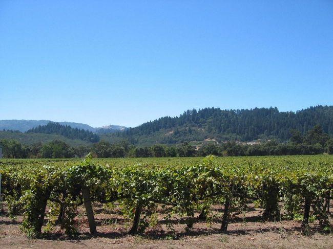サンフランシスコから車で1時間半のワインカントリーと呼ばれるナパ、ソノマはぶどう園の風景が美しいカリフォルニアワインの一大産地で、特に春から秋の葉が青く芽吹いて赤く染まるまでの時期はバレー中に絨毯を敷きつめたようで息をのむ光景です。。<br /><br />まったく酒類を飲まない夫婦なのでワイナリーにはお客様がいらした時に行くぐらいですが、あまりに美しい風景に魅せられてベイエリアで一番のお気に入りドライブルートになっています。少しずつ撮り溜めていたものを集めてみました。<br /><br />ナパ、セントヘレナ、カリストガ<br />http://www.napavalley.com/<br /><br />ソノマ<br />http://www.sonoma.com/<br /><br />もう1つのナパ旅行記もどうぞ。<br />ナパ ホリデー・ギフトフェア  ☆サンフランシスコ・ベイエリア紀行(6)☆<br />http://4travel.jp/traveler/muffin/album/10106330/<br /><br />2007.4  初稿<br />2007.12  改訂