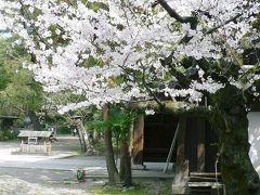 日本の旅 京都の桜【1】  上御霊神社周辺の街並みと桜