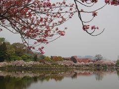 藤枝蓮花寺池の四季(春)