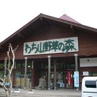 京丹波町散策:わち山野草の森