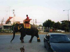 タイに行ってきました。(アユタヤ編)