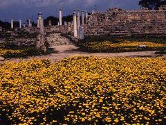 キプロス島の花 アギア・ナパ