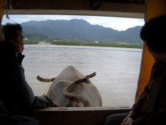 秘境!ジャングル!西表島と水牛たちの由布島