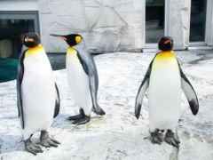 旭山動物園 2006春