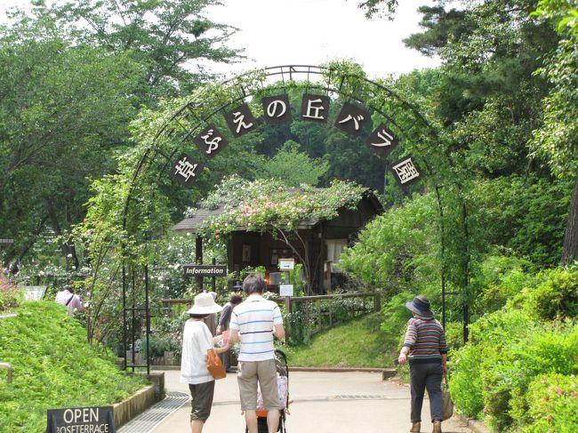 佐倉市散策(6)・・草ぶえの丘にローズガーデンを訪ねて