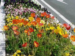 日本の旅 関西を歩く 大阪・御堂筋を彩る花壇と彫刻