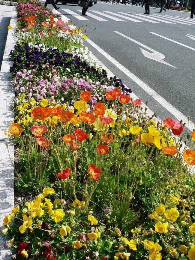 「なにわのメインストリート」御堂筋は「大阪の顔」として花壇が造られ彫刻が並んでいる。花壇や彫刻を眺めながら御堂筋を散歩するのも楽しい。<br />(写真は堂島川沿いの御堂筋の花壇)<br /><br /><br />