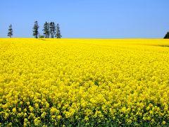 好きな色は・・・もちろん黄色!! ~日本一の菜の花畑~