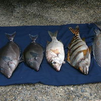 和歌山海釣り紀行?