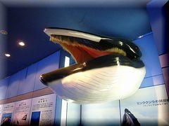 シャチの「クーちゃん」・・・・・名古屋港水族館