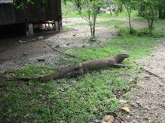 コモドアイランド ヌサトゥンガラ インドネシア