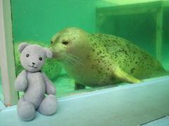03遊べる宮島水族館(プチ広島の旅その3)