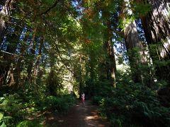 レッドウッド国立・州立公園 *** 北カリフォルニア~オレゴン3日間の旅 (3)